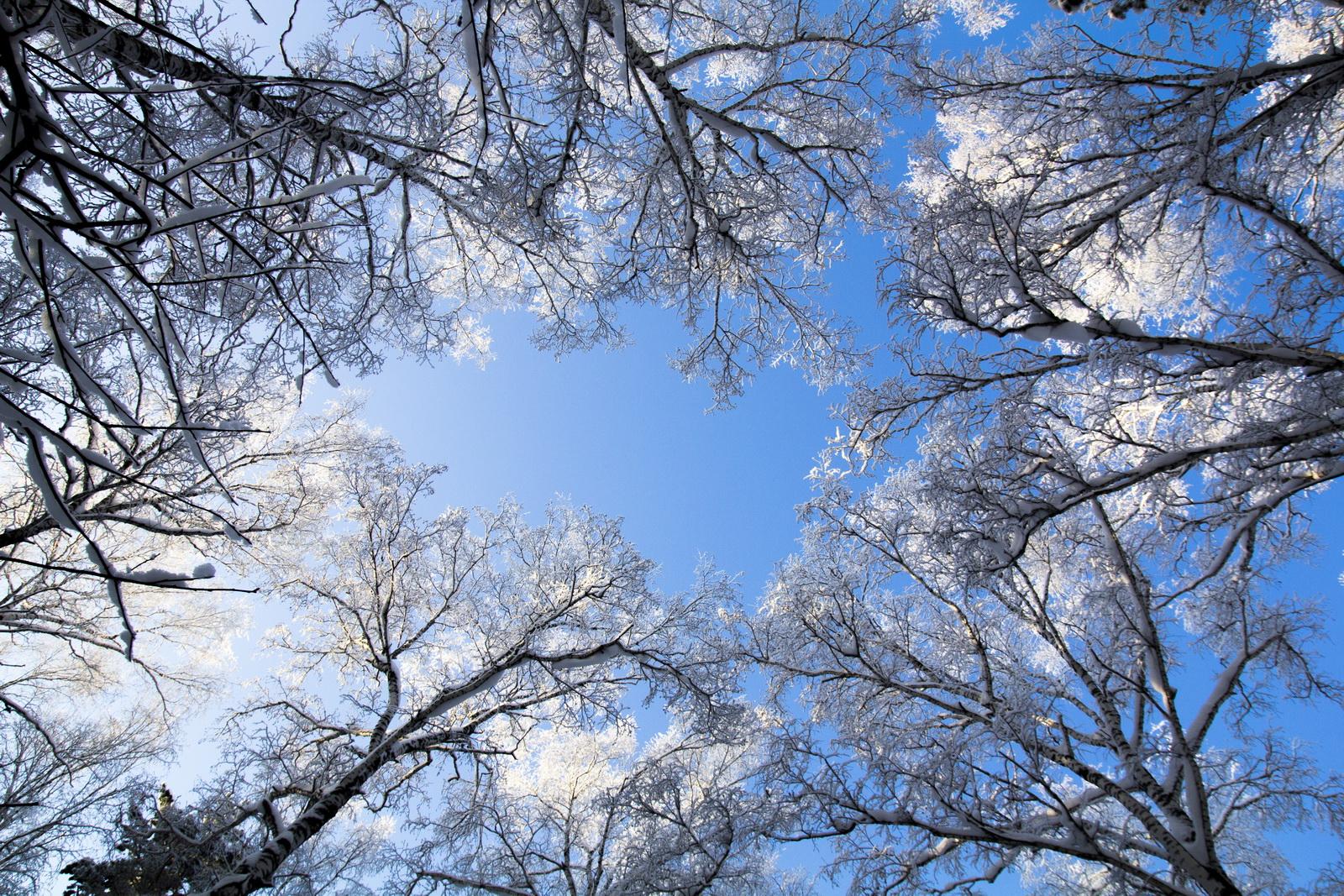 Kết quả hình ảnh cho ảnh đẹp mùa thu nước Nga
