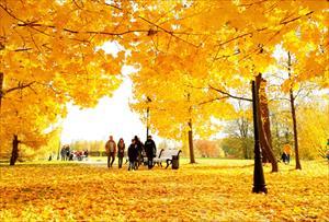 """Bộ ảnh số 8: """"Thu vàng rực rỡ trên các công viên Mátxcơva"""" - Nikitina Darya Dmitrievna"""