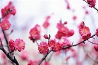 """Giấy mời dự """"Hội diễn văn nghệ cộng đồng người Việt Nam tại Liên Bang Nga"""" 2012 ngày 15/1"""