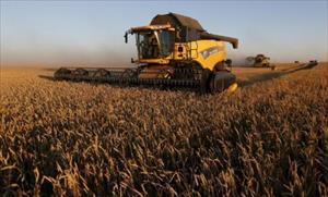 Châu Á sẽ ngày càng phụ thuộc vào lúa mì Nga?
