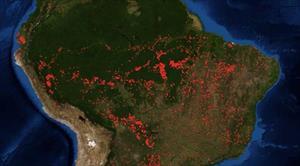 Cháy rừng Amazon nhìn thấy từ không gian