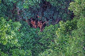 Những bí ẩn khủng khiếp trong rừng rậm Amazon