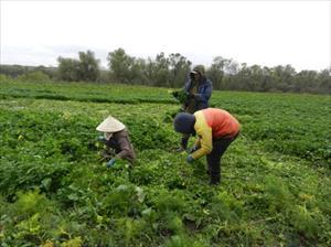 Cuộc sống vất vả mưu sinh của những người Việt trồng rau tại Nga