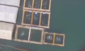 """[Video] Nga phát hiện một """"nhà tù"""" giam giữ hơn 100 con cá voi"""