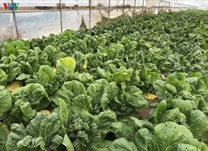 Đầu tư vào nông nghiệp - Sinh kế lâu dài cho cộng đồng người Việt tại Nga