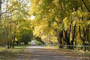 """Sắc màu """"mùa thu vàng"""" ở Moscow"""