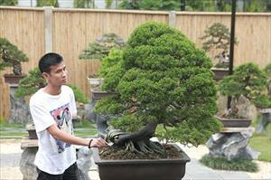 Hoa mắt vườn bonsai Nhật tiền tỷ giữa đất Bắc Giang