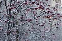 Bộ ảnh số 2: Ngẫu hứng mùa đông