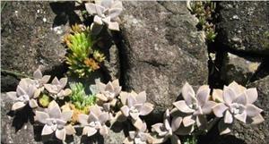 Bông hoa ở bên kia vách núi