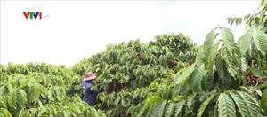 """Cà phê Việt Nam """"đổ bộ"""" thị trường Nhật Bản"""