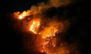 Cháy rừng Amazon, G7 và câu hỏi về quản trị toàn cầu