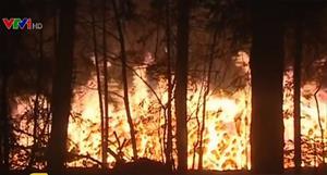 Điều tra về vụ cháy rừng quốc gia Nga
