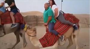 """""""Cười không ngậm được mồm"""" khoảnh khắc du khách cưỡi lạc đà"""