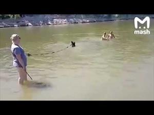 Cô gái Nga dắt gấu đi bơi, vùng vẫy tắm chung với du khách