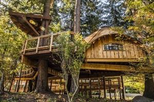 """Văn phòng trên cây """"cổ tích"""" của Microsoft: Chốn làm việc đáng mơ ước nhất thế giới"""