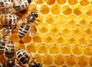 Bị những bệnh này cứ lấy mật ong, sáp ong chữa là khỏi