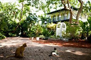Đàn mèo của Hemingway sống sót qua siêu bão Irma