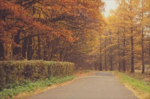 Bộ ảnh số 5: Mùa thu buồn trong công viên Izmailovo