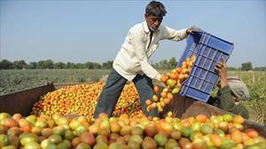 Thổ Nhĩ Kỳ không hạn chế nhập khẩu nông sản Nga?