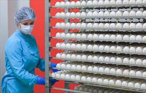 Nga phát triển công nghệ chiếu xạ trứng gà vịt an toàn