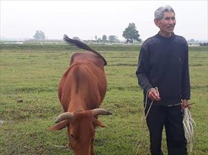 Chủ tịch TP Thanh Hóa lên tiếng vụ trâu bò ăn cỏ phải đóng phí