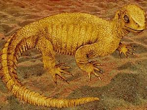 Phát hiện hóa thạch một loài rùa chưa từng được biết đến