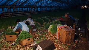Nông dân Việt trên đất Nga - nhọc nhằn mưu sinh