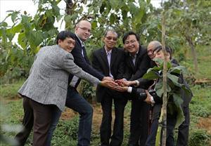 Doanh nghiệp Nga bất ngờ về cà chua thân gỗ tại Lâm Đồng