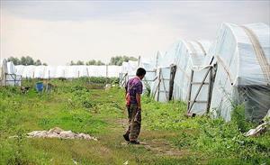 Tỉnh Volgograd: Lao động nhập cư bất hợp pháp trồng rau quả với hóa chất